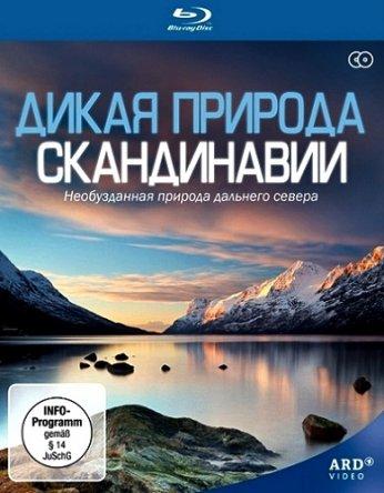 Дикая природа Скандинавии / Wild Scandinavia / Wildes Skandinavien (Сезон 1) (2011)